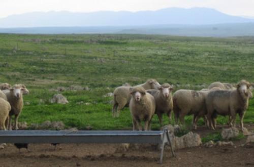 Análisis de rentabilidad en explotaciones de ovino de carne