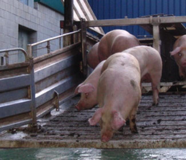 ANTA y Sateliun firman un acuerdo de colaboración para garantizar el bienestar animal