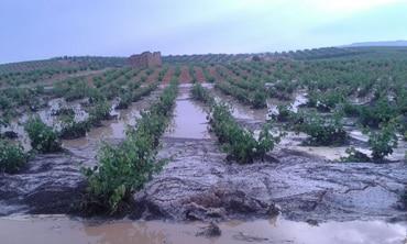Tormenta con pedrisco e inundaciones afectan a unas 1.200 hectáreas en Utiel-Requena
